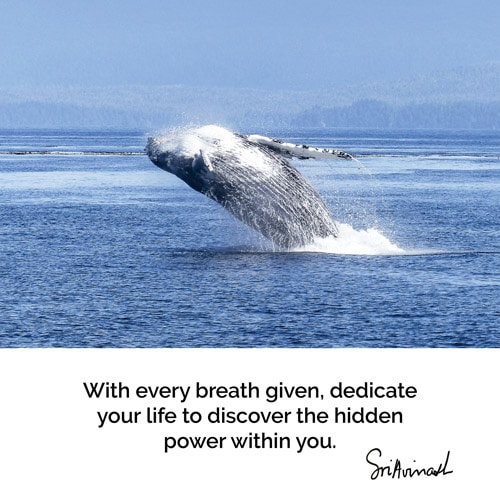 With every breath given, dedicate your life to discovering the hidden power within you