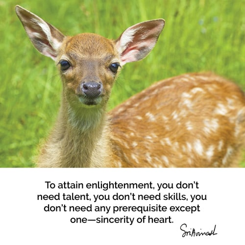 To attain enlightenment, you don't need talent, you don't need skills, you don't need any pre-requisite except one, sincerity of heart.