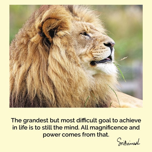 The grandest but most difficult goal to achieve in life is to still the mind. All magnificence and power comes from that.
