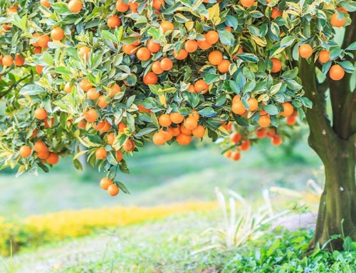 A Taste of Gratefulness to Transform Your Life