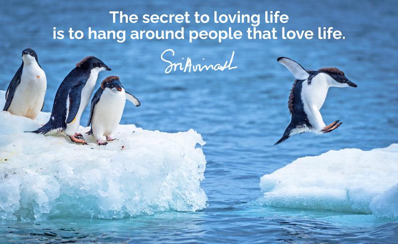 Penguins loving life, grateful together